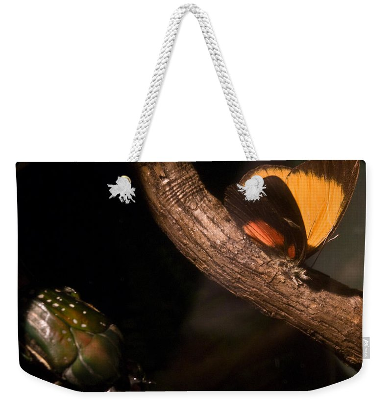 Tropical Weekender Tote Bag featuring the photograph Tropical Butterfly And Rhinoceros Beetle by Douglas Barnett