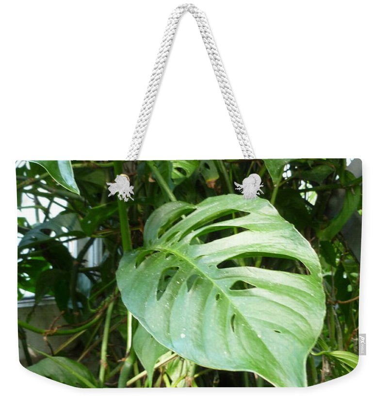 Vivid Weekender Tote Bag featuring the photograph Tropical Green Foliage by Lingfai Leung