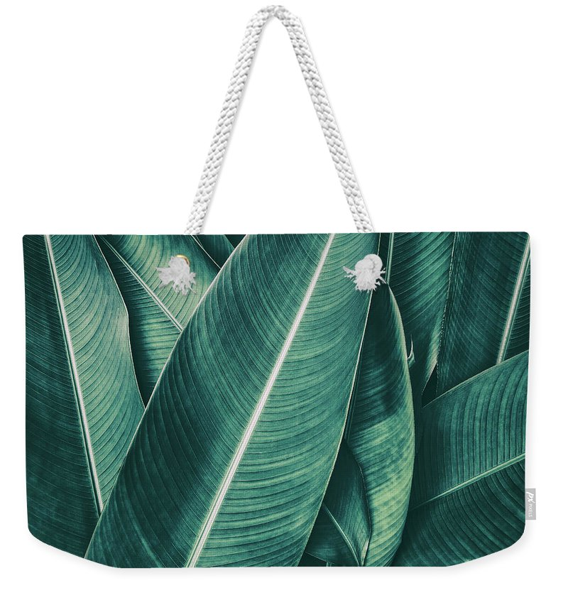 Spa Weekender Tote Bag featuring the photograph Tropical Palm Leaf, Dark Green Toned by Pernsanitfoto