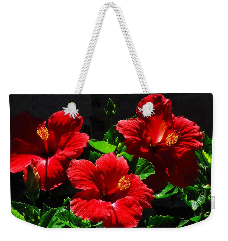 Tropical Hibiscus Weekender Tote Bag featuring the photograph Tropical Trio by Lynn Bauer