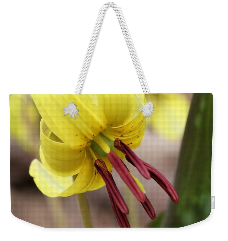 Trout Lily Weekender Tote Bag featuring the photograph Trout Lily Or Dog-toothed Violet by Doris Potter