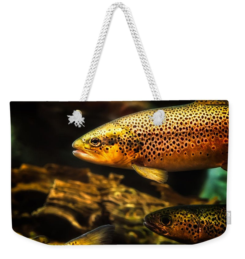 Trout Weekender Tote Bag featuring the photograph Trout Swiming In A River by Bob Orsillo