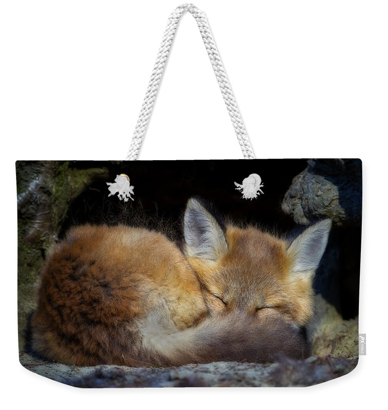 Red Fox Weekender Tote Bag featuring the photograph Fox Kit - Trust by John Vose