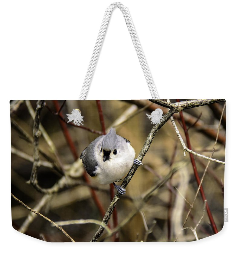 Tufted Titmouse Weekender Tote Bag featuring the photograph Tufted Titmouse On The Watch by LeeAnn McLaneGoetz McLaneGoetzStudioLLCcom