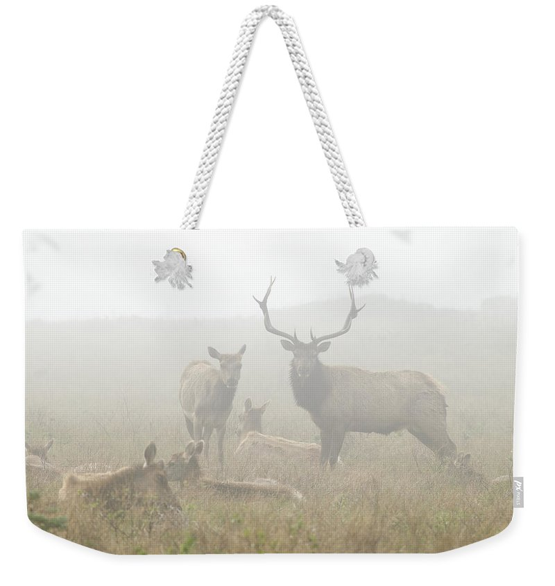 Feb0514 Weekender Tote Bag featuring the photograph Tule Elk Bull And Harem In Fog Point by Sebastian Kennerknecht