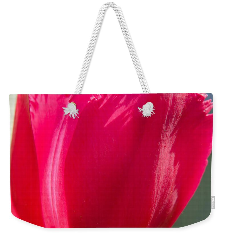 Spring Weekender Tote Bag featuring the photograph Tulip On The Gray Background by Michael Goyberg