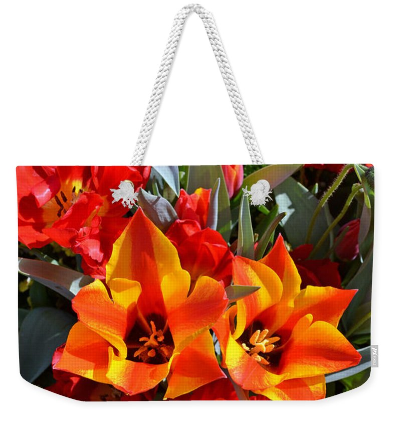 Tulip Weekender Tote Bag featuring the photograph Tulips At The Pier by Holly Blunkall