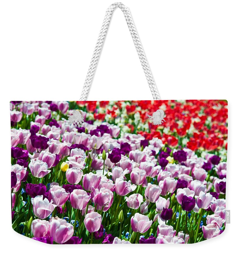 Tulip Weekender Tote Bag featuring the photograph Tulips Field by Sebastian Musial