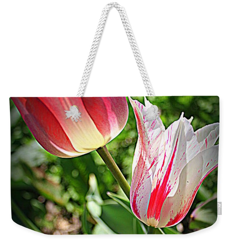 Tulips Weekender Tote Bag featuring the photograph Tulips In Red And White by Dora Sofia Caputo Photographic Design and Fine Art