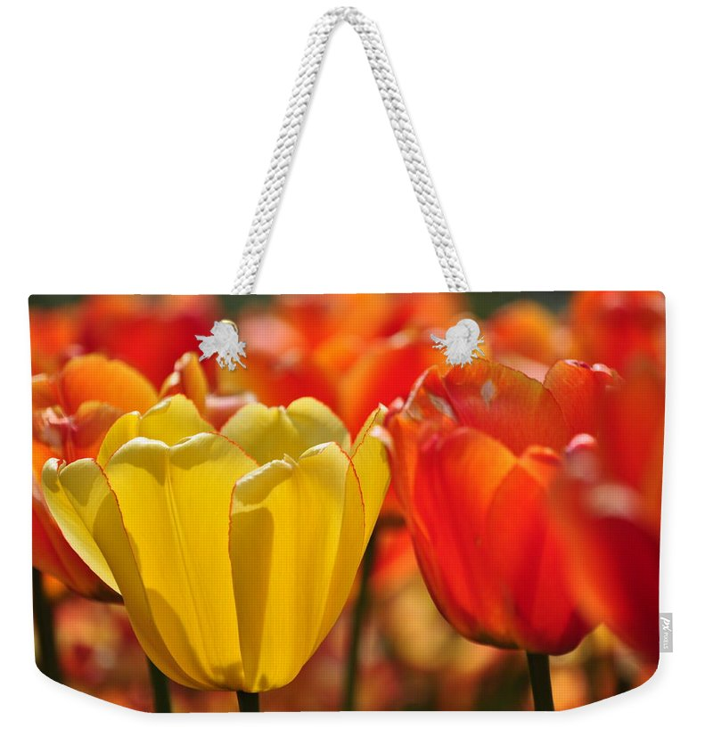 Tulip Weekender Tote Bag featuring the photograph Tulips In The Midst by Thomas Shockey