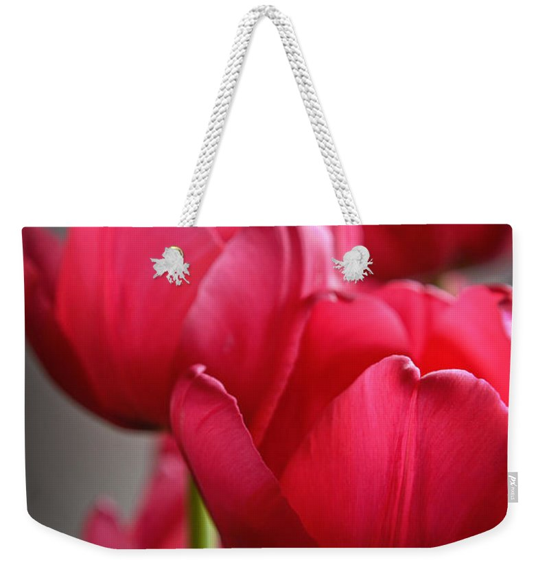 Pink Tulips Weekender Tote Bag featuring the photograph Tulips In The Morning Light by Mary Machare