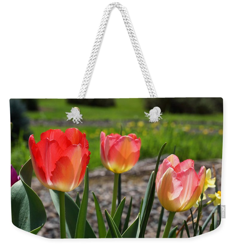 Red Weekender Tote Bag featuring the photograph Tulips Red Pink Tulip Flowers Art Prints by Patti Baslee