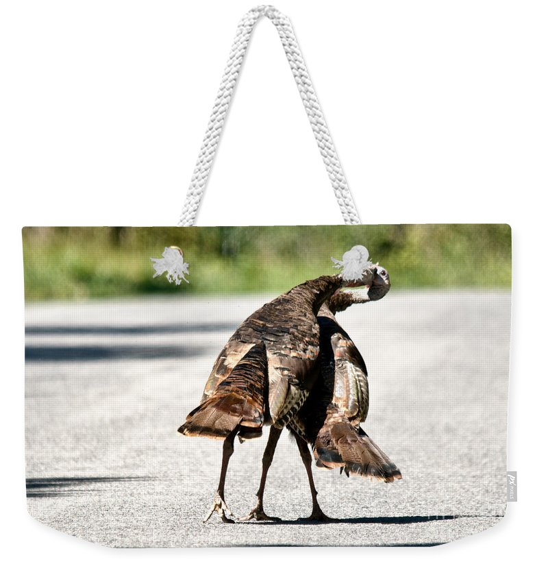Turkey Weekender Tote Bag featuring the photograph Turkey Fight by Cheryl Baxter