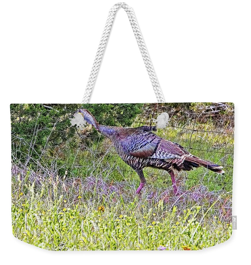 Roadside Gobbler Weekender Tote Bag featuring the photograph Turkey In The Draw by Gary Holmes