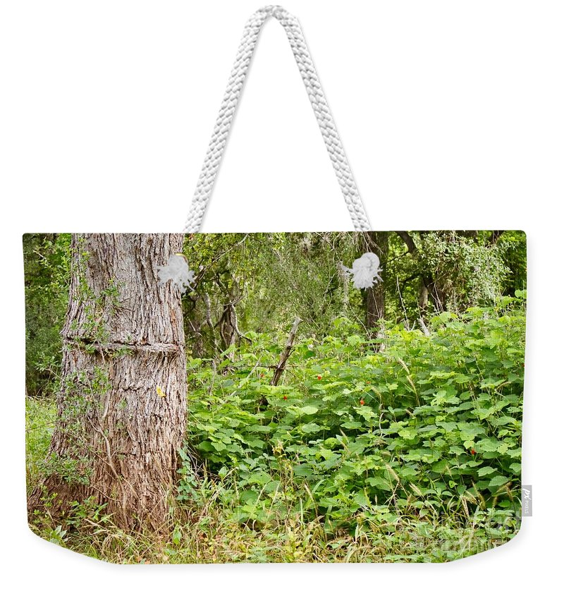 Trees Weekender Tote Bag featuring the photograph Turk's Cap And Tree by Gary Richards