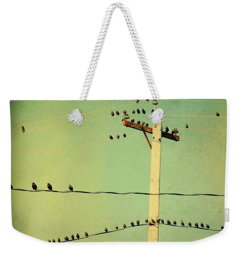 Retro Color Weekender Tote Bag featuring the photograph Tweeters Tweeting by Gothicrow Images