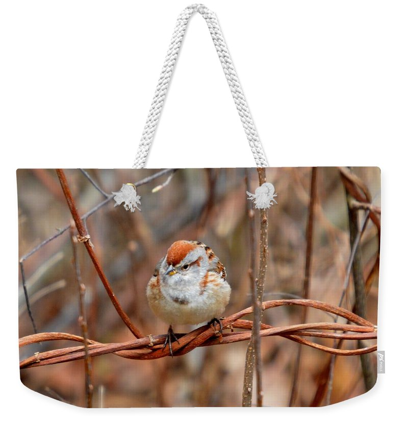 Chipping Sparrow Weekender Tote Bag featuring the photograph Twisted Vine Perch by Thomas Phillips