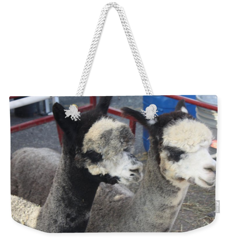 Two Alpacas Weekender Tote Bag featuring the photograph Two Alpacas by John Telfer