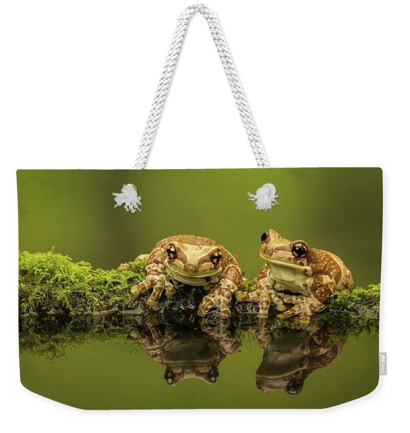 Milk Weekender Tote Bag featuring the photograph Two Amazon Milk Frogs by Markbridger