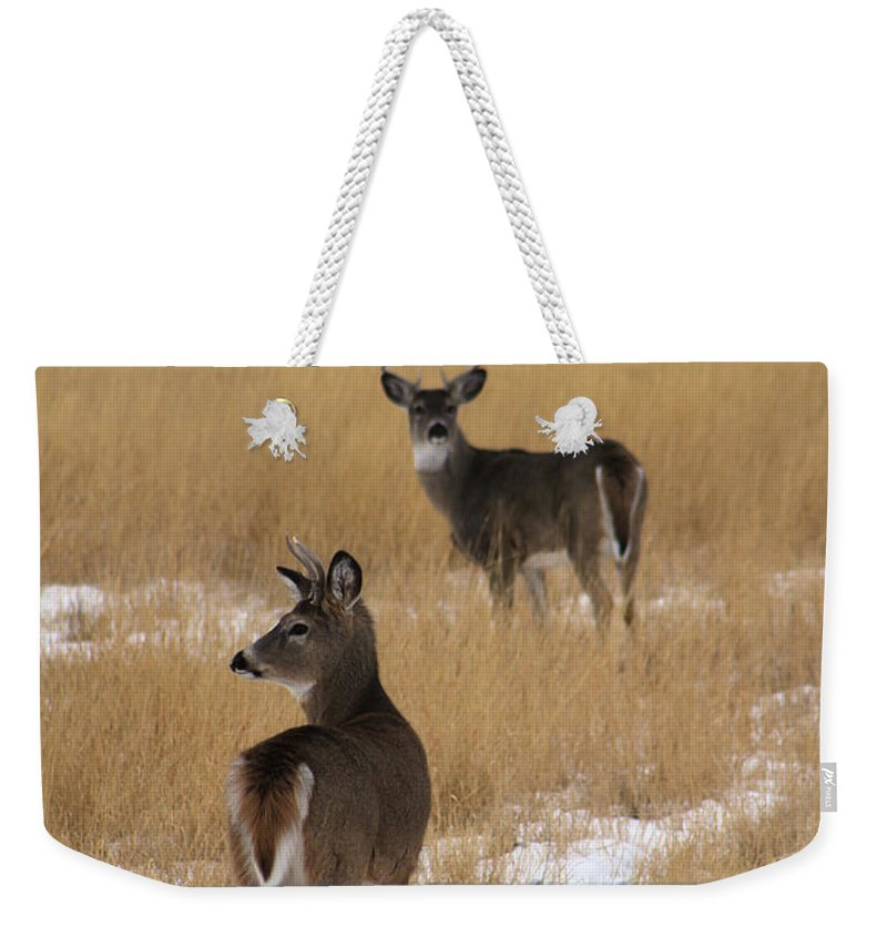 Deer Weekender Tote Bag featuring the photograph Two Bucks by Alyce Taylor