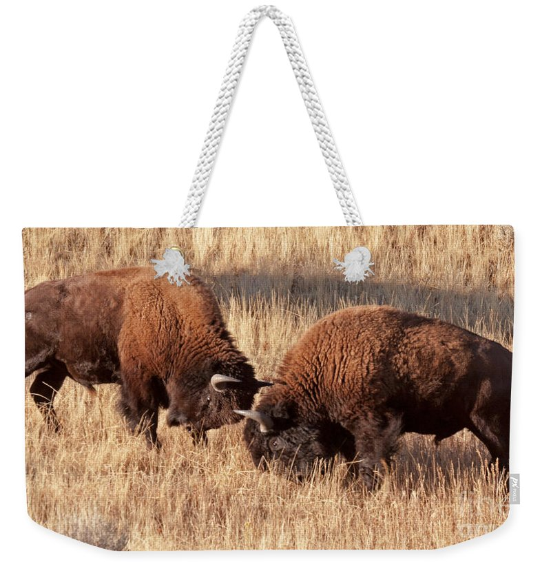 Autumn Weekender Tote Bag featuring the photograph Two Bull Bison Facing Off In Yellowstone National Park by Fred Stearns