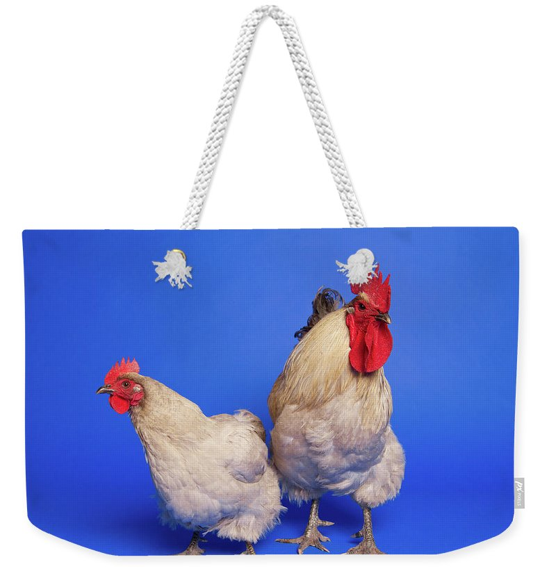 Hen Weekender Tote Bag featuring the photograph Two Chickens by Square Dog Photography