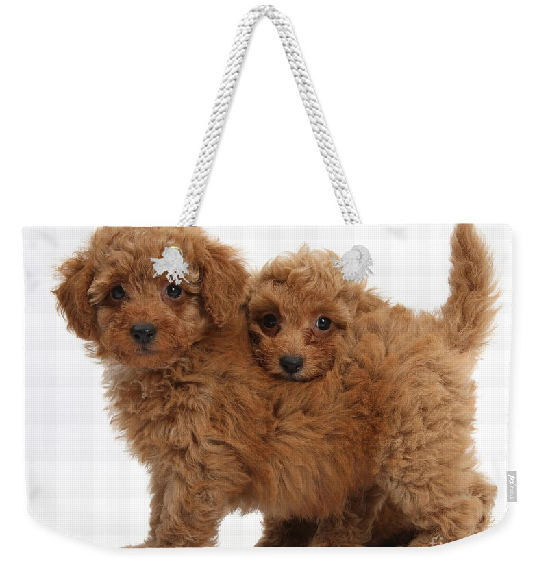 Two Cute Red Toy Poodle Puppies Weekender Tote Bag