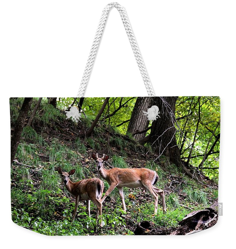 Woods Weekender Tote Bag featuring the photograph Two Deer by Elizabeth Winter
