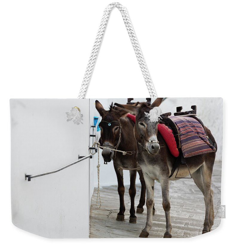 Working Animal Weekender Tote Bag featuring the photograph Two Donkeys Tethered In The Street In by Martin Child