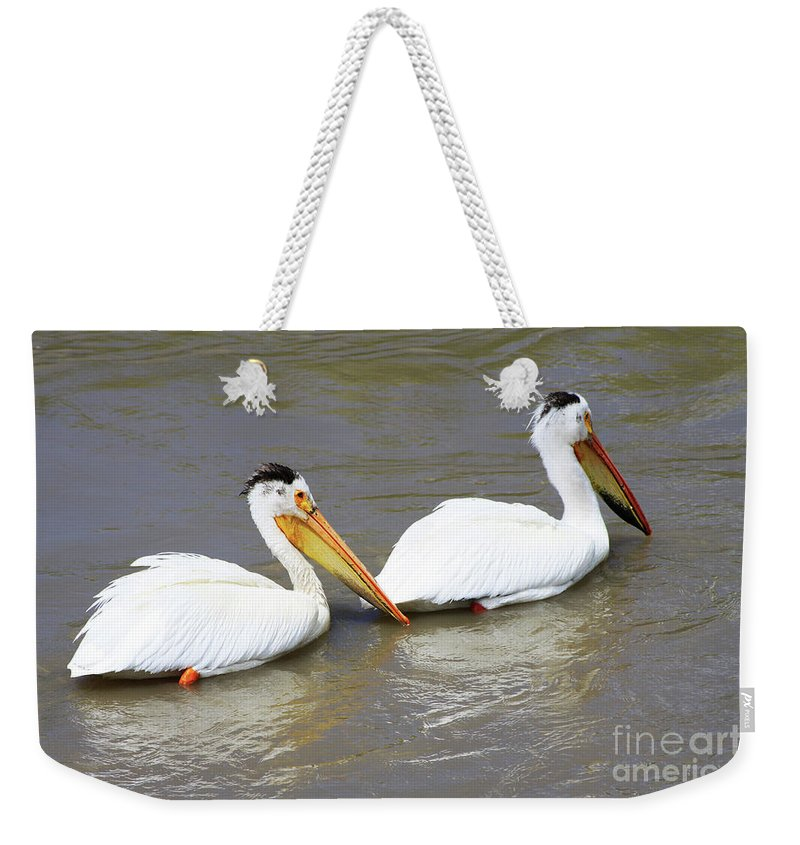 Bird Weekender Tote Bag featuring the photograph Two Pelicans by Alyce Taylor