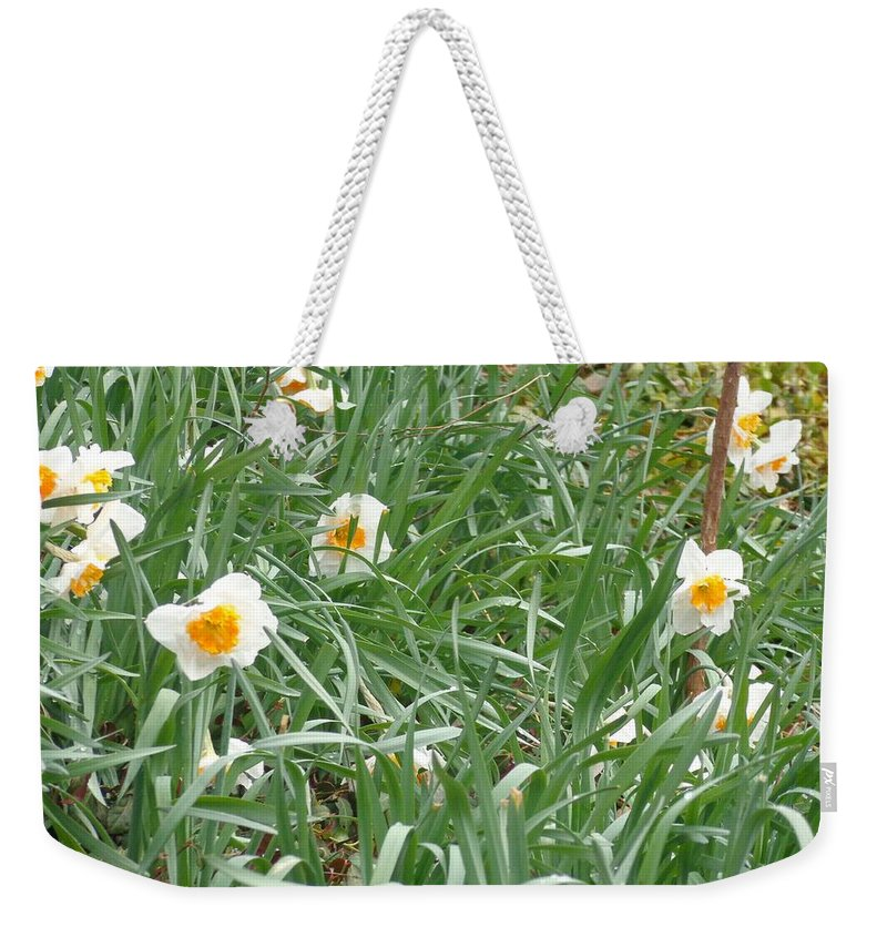 Spring Weekender Tote Bag featuring the photograph Two Toned Daffodils by Jannice Walker