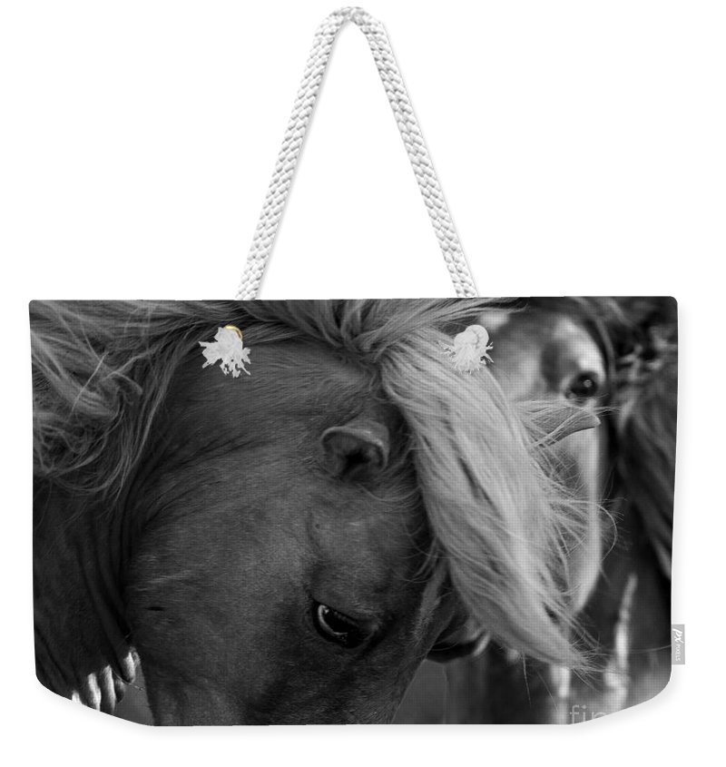 Carrott Island Weekender Tote Bag featuring the photograph Two Wild Stallions Close by Carol Walker