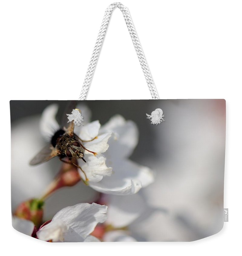 Fly Weekender Tote Bag featuring the photograph Ugly Pollinator by Ian Ashbaugh