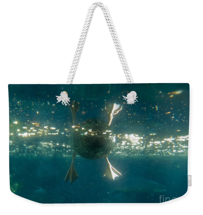 Activity Weekender Tote Bag featuring the photograph Underwater View Of Duck's Webbed Feet by Stephan Pietzko