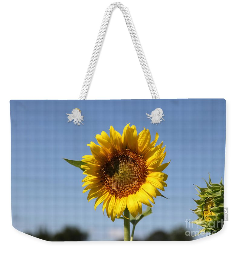 Sunflowers Weekender Tote Bag featuring the photograph United Through Challenge by Amanda Barcon