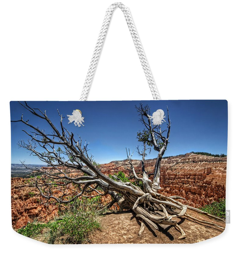 Tree Weekender Tote Bag featuring the photograph Uprooted - Bryce Canyon by Tammy Wetzel