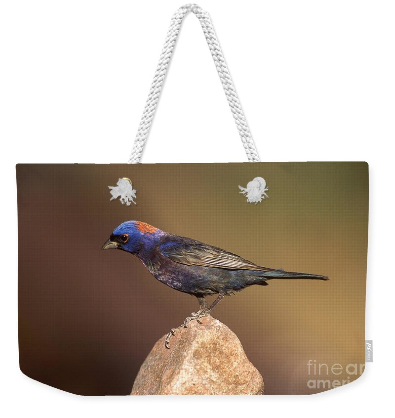 Animal Weekender Tote Bag featuring the photograph Varied Bunting by Anthony Mercieca