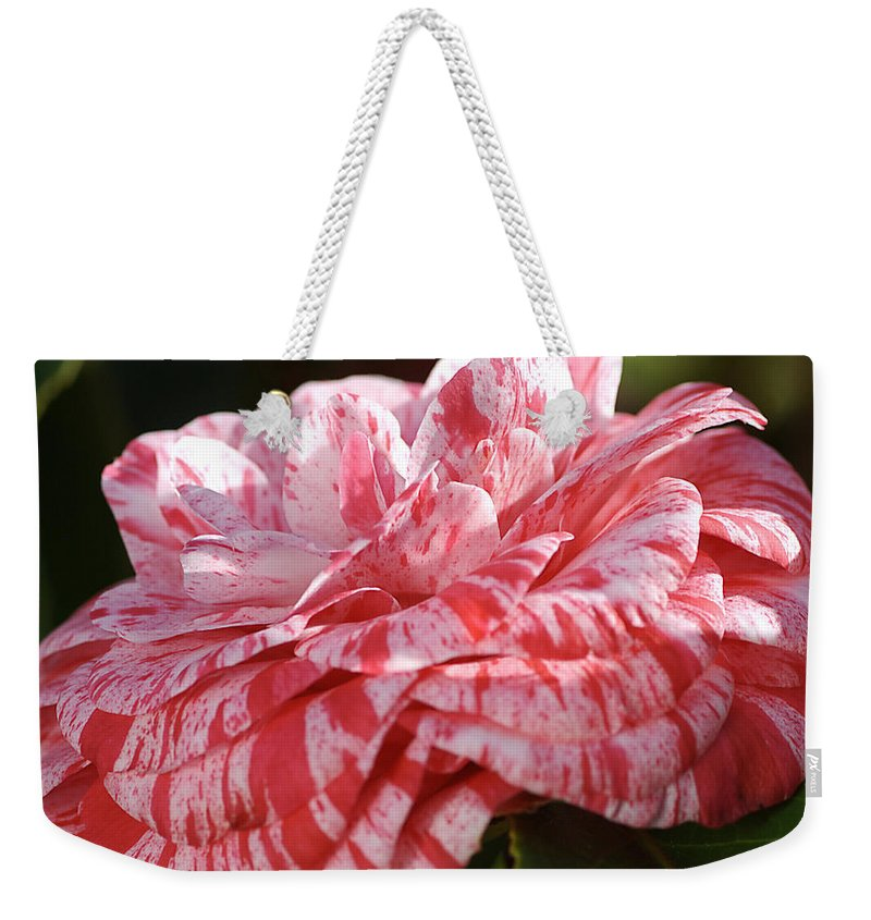Variegated Camellia Weekender Tote Bag featuring the photograph Variegated Camellia by Joy Watson