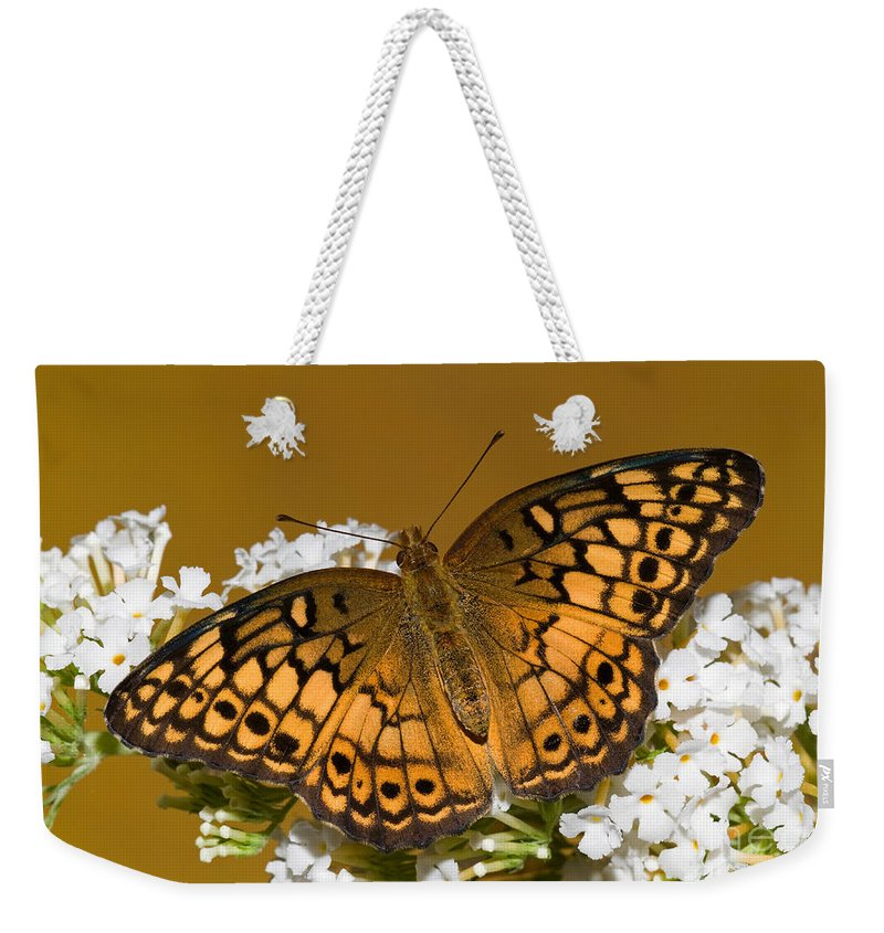 Variegated Fritillary Butterfly Weekender Tote Bag featuring the photograph Variegated Fritillary by Millard H. Sharp