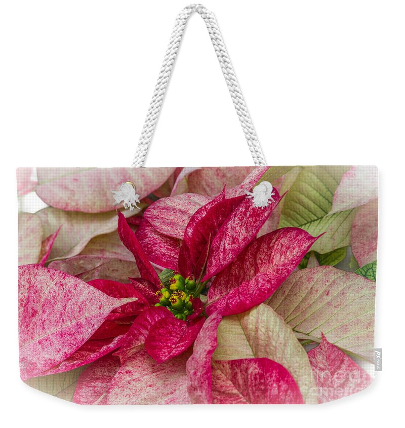 Poinsettia Weekender Tote Bag featuring the photograph Varigated Poinsettia by Darleen Stry