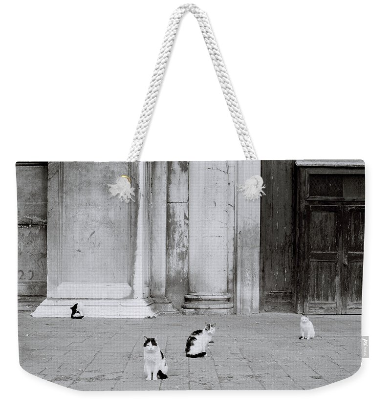 Cat Weekender Tote Bag featuring the photograph Cats Of Venice by Shaun Higson