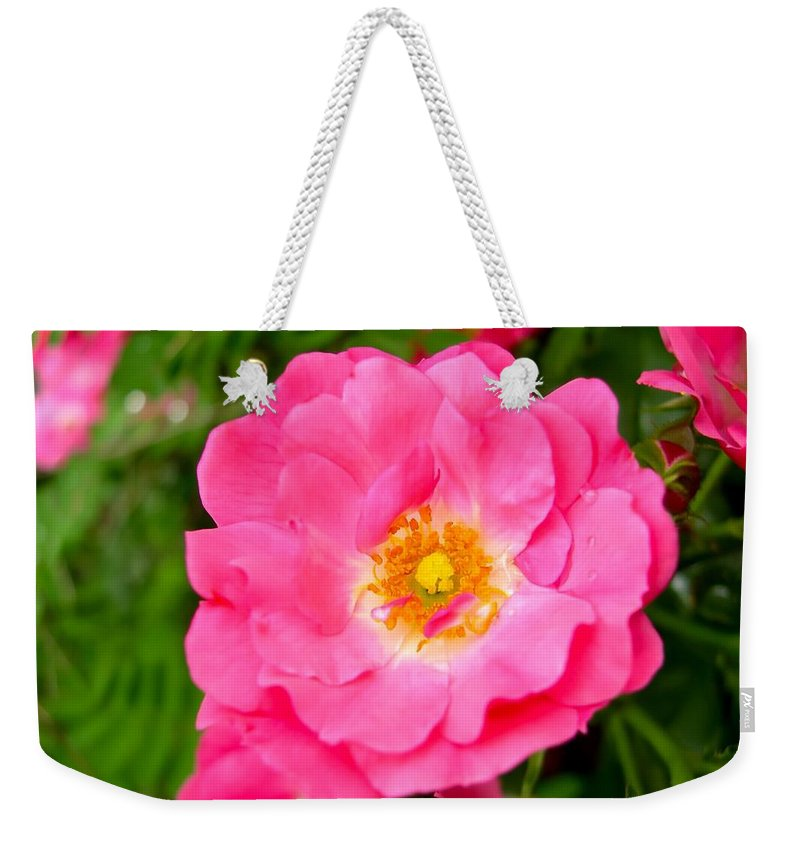 Very Pink Rose Weekender Tote Bag featuring the photograph Very Pink Rose by Cynthia Woods