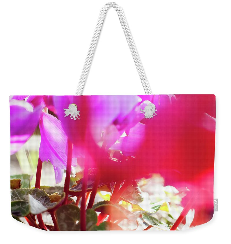 Shadow Weekender Tote Bag featuring the photograph Vibrant Magenta Cyclamen In Bloom by Erika Pino