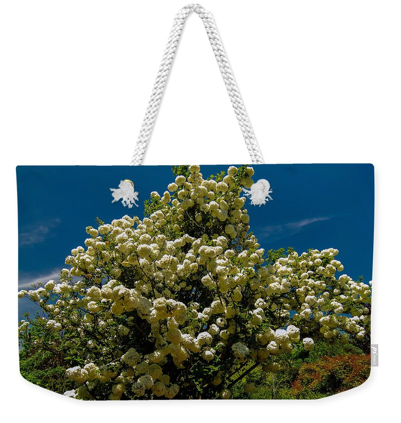 White Weekender Tote Bag featuring the photograph Viburnum Opulus Compactum Bush With White Flowers by Alex Grichenko