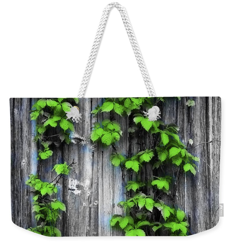 Vines Weekender Tote Bag featuring the photograph Vines On The Side Of A Barn by Bill Cannon