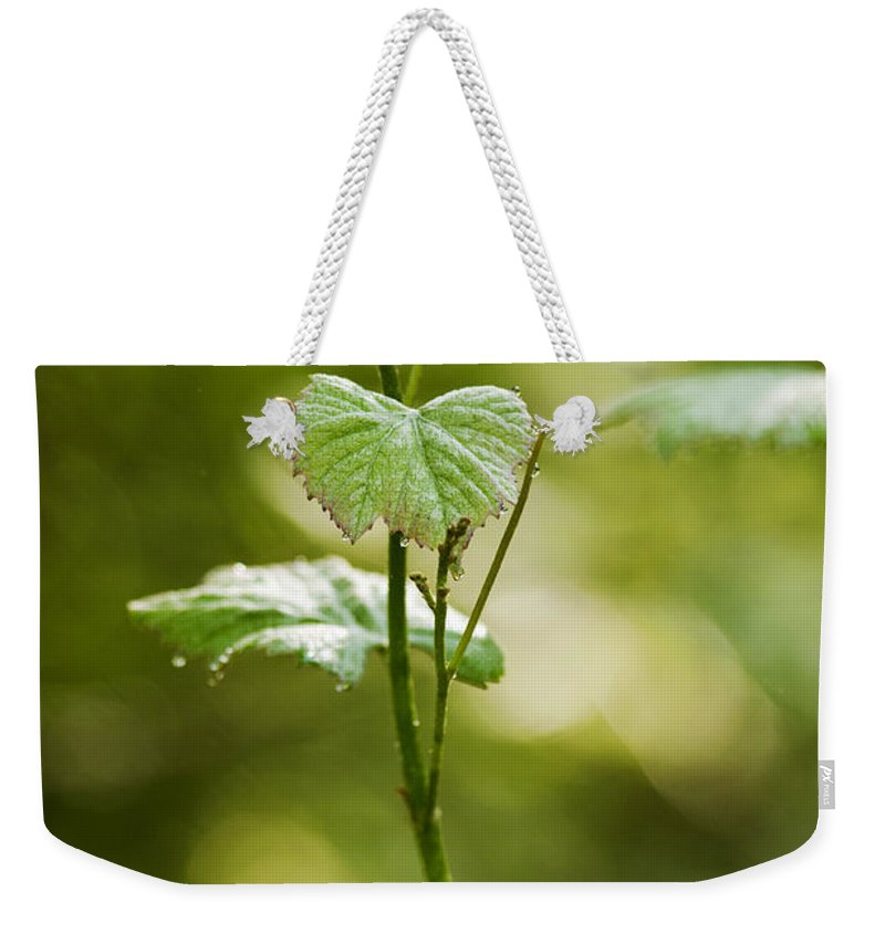 Nature Weekender Tote Bag featuring the photograph Vineyard Vine by Christina Rollo