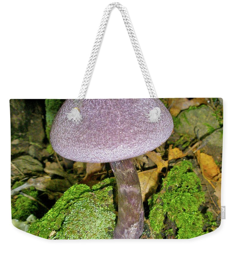 Mushroom Weekender Tote Bag featuring the photograph Violet Cortinarious -cortinarious Violaceus Mushroom On Mossy Log by Mother Nature