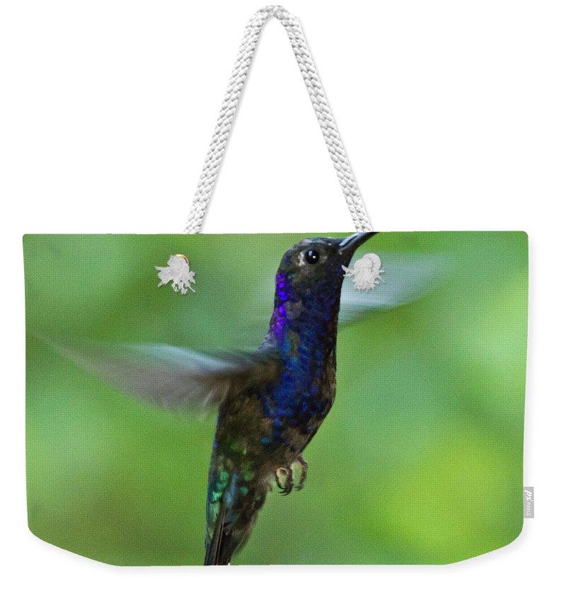 Violet Sabrewing Hummingbird Weekender Tote Bag featuring the photograph Violet Sabrewing Hummingbird by Heiko Koehrer-Wagner