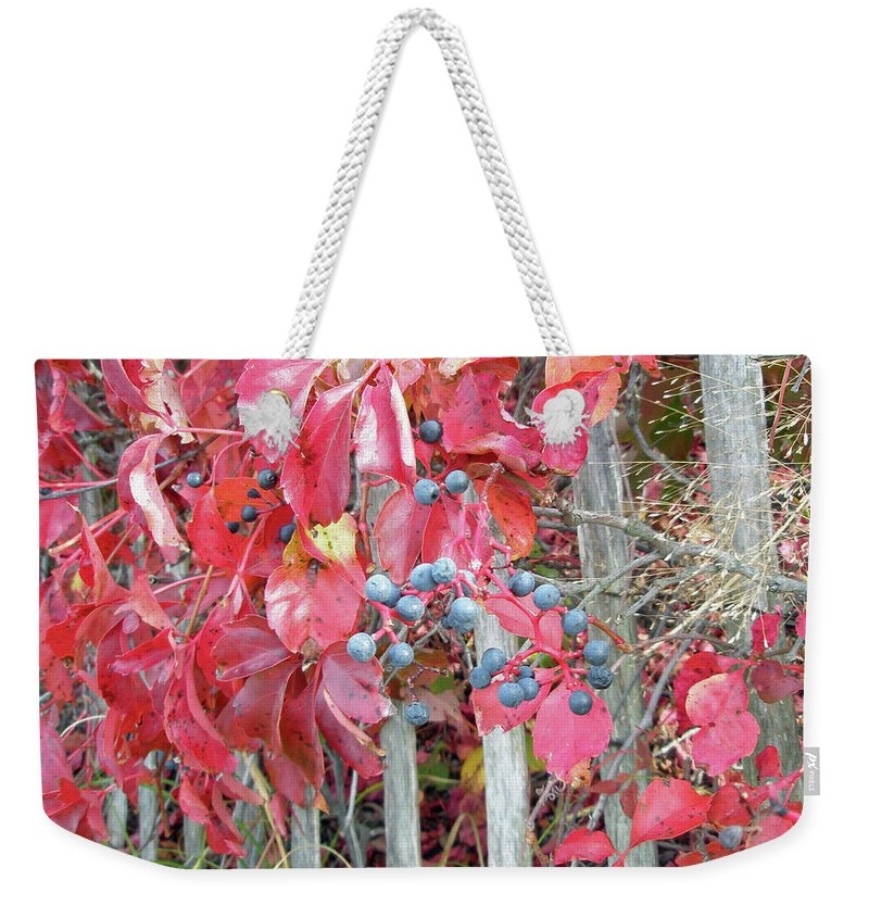 Foliage Weekender Tote Bag featuring the photograph Virginia Creeper Fall Leaves And Berries by Mother Nature