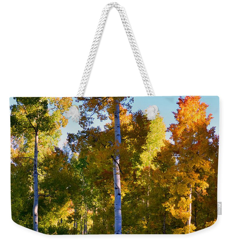 Aspen Trees Weekender Tote Bag featuring the photograph Aspens In Vertical by David Lee Thompson